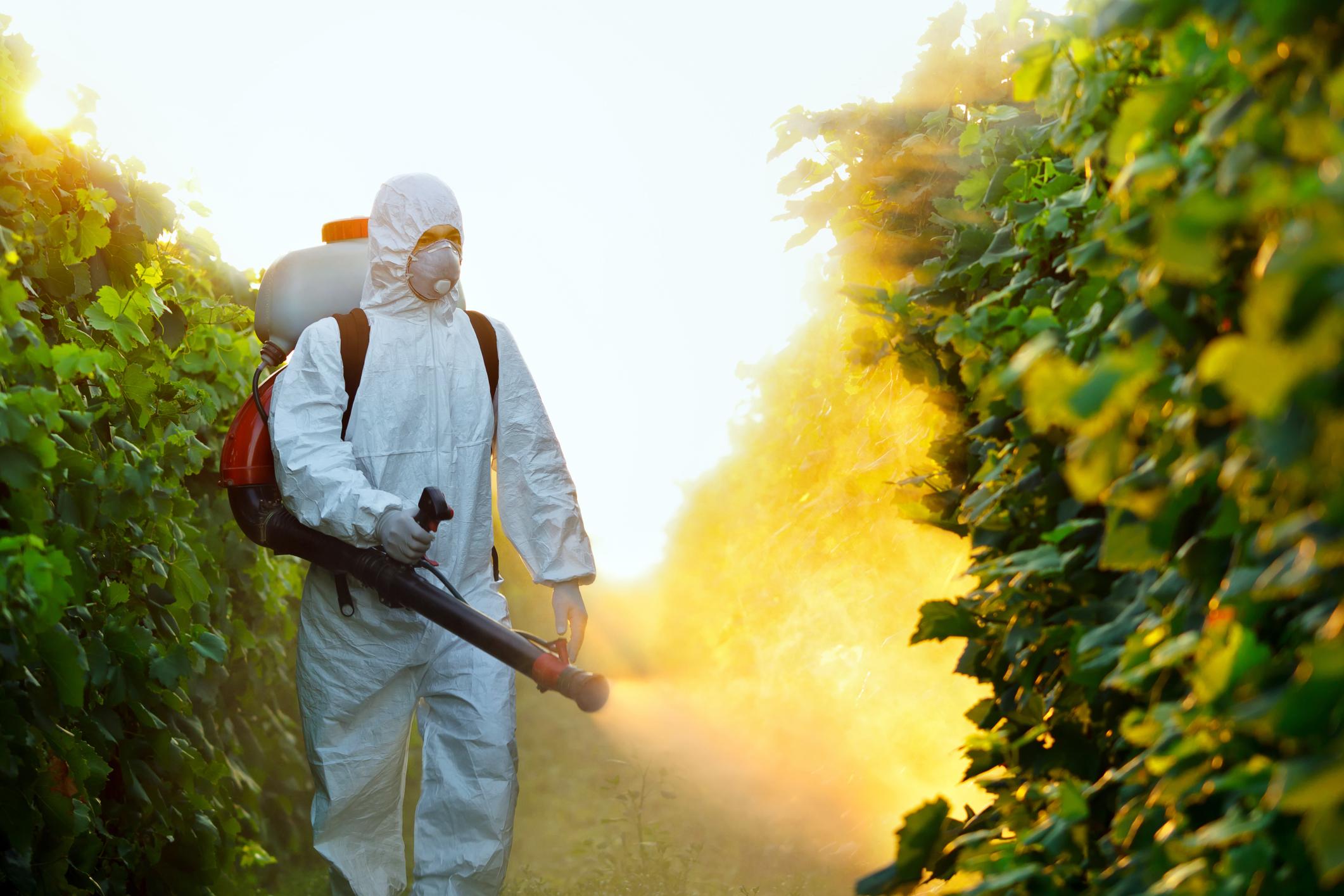 شركه رش مبيدات بخميس مشيط